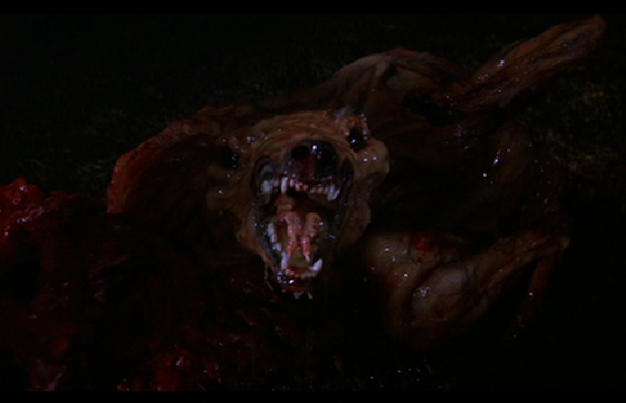 High Res Pictures Cujo Dogs